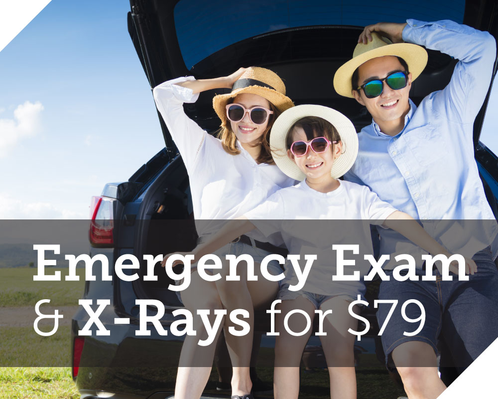 Exam and X-Rays for $39